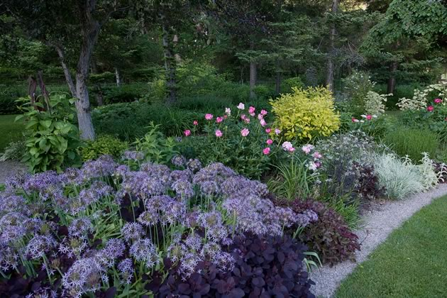 A clever combination of pale allium and deep purple Cotinus anchor this spring garden. Photo by Rosemary Hasner / Black Dog Creative Arts.