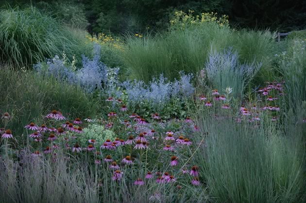 The grass garden in summer is awash in big bluesytem and little bluestem grasses, echinacia, and the blue tones of Russian sage and eryngium. Photo by Rosemary Hasner / Black Dog Creative Arts.