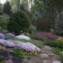 Painterly dabs of colour announce spring in one of the rock gardens. Photo by Liz Knowles.