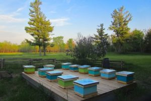 Newly installed colonies sit ready to grow at the main apiary. Photo by Debbie Gray.