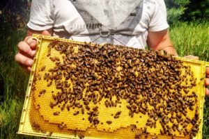 """It's not about the honey for us,"" says Jeff. For one, it's about helping to bolster a battered bee population. Photo by Debbie Gray."