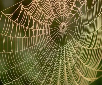 A dewy spiderweb. Photo by Pixabay.