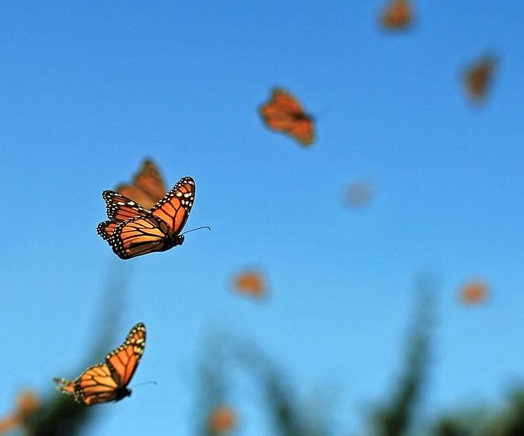 Schmetterlingsky