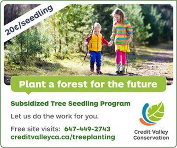 CVC Tree Planting