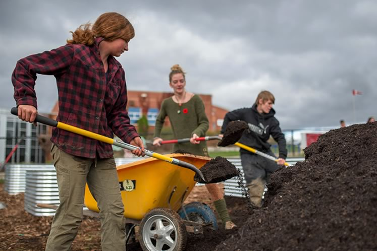 Digging in the dirt. Student Georgia Lavers (centre) and Everdale staffers Jordan Tilley (left) and Sam Nicholls moved mulch for the school's new raised vegetable beds last fall as part of the Everdale and Erin District High School Farm Project. Photo by James MacDonald.