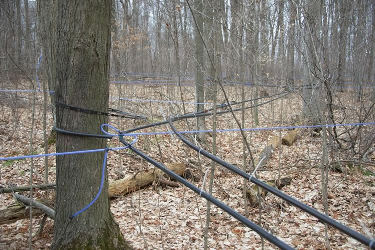 Sap from 5,000 trees flows into 65 kilometres of plastic tubing in the Breedons' sugar bush. Photo by Pete Paterson.