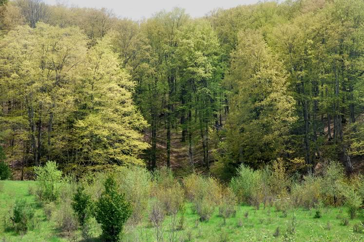 Hockley Valley Provincial Nature Preserve, May 16. Photo by Don Scallen.