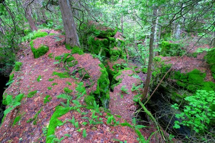 Noisy River Provincial Park, June 20. Photo by Don Scallen.