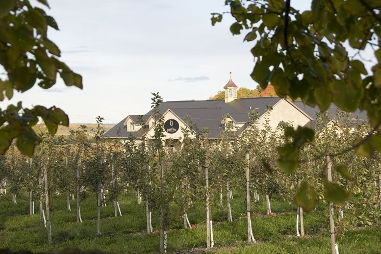 The orchards at Spirit Tree Estate Cidery in Caledon. Photo by Pete Paterson.