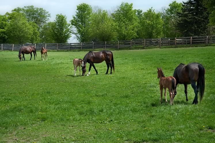 Two recent additions to Headwaters' large equine population. Photo by Rosemary Hasner / Black Dog Creative Arts.