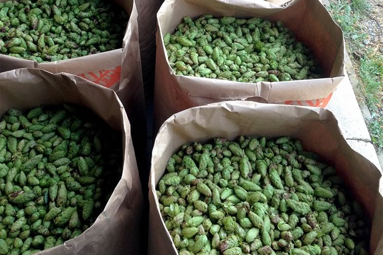 Bags of hops at GoodLot. Photo courtesy of GoodLot.