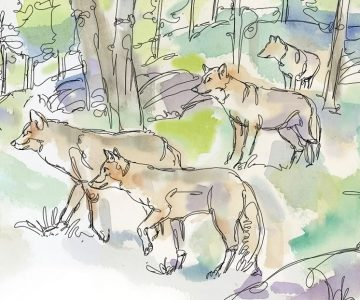 Varmints at the Gate. Illustration by Shelagh Armstrong.