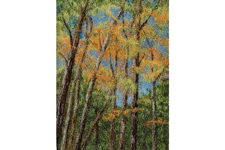 HAF_TraceyLawko_AutumnTrees
