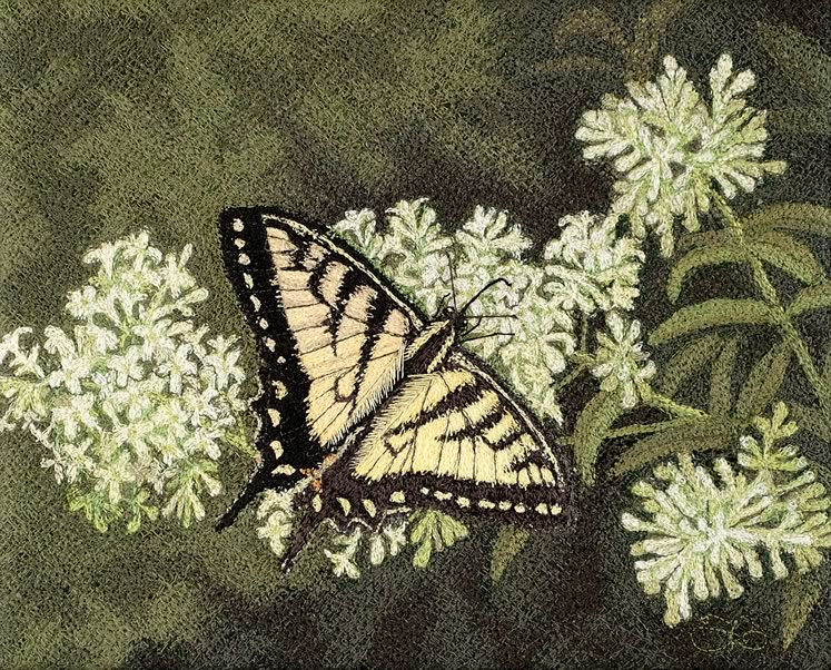 "Tiger Swallowtail 8"" x 10"" ~ by Tracey Lawko"
