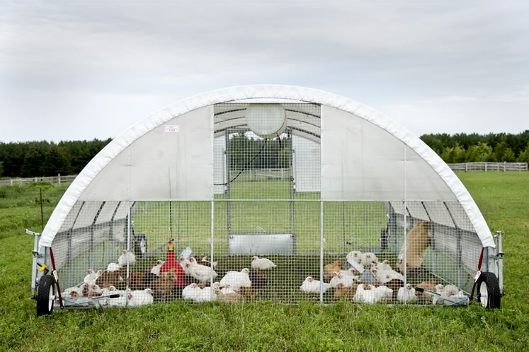 Alix and George Bezak use portable structures to shade and protect their chickens, geese, turkeys and ducks while they forage for food. Photo by Pete Paterson.