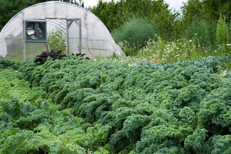 A patch of leafy greens at Mono's Am Braigh Farm. Photo by Rosemary Hasner / Black Dog Creative Arts.