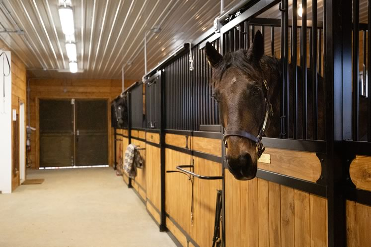 Deb's horse Rhubin looks out from his stall. The barn was built by Orangeville's Canadian Outbuildings. Photo by Erin Fitzgibbon.