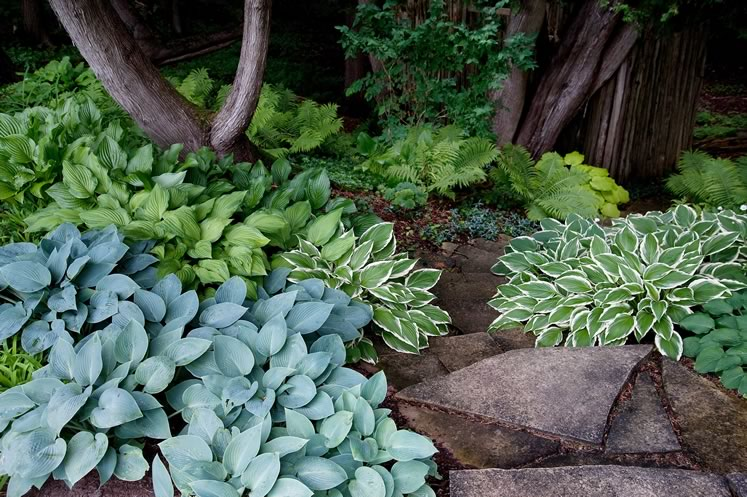 Colourful hostas and stone steps lead invitingly down from garden to forest hollow. Photo by Rosemary Hasner / Black Dog Creative Arts.