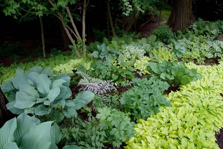 Streams of hostas punctuated by pinky-green Japanese and other ferns demarcate the shady edge of the woods. Photo by Rosemary Hasner / Black Dog Creative Arts.