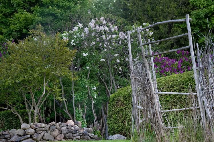 A weathered trellis provides a rustic frame to the burst of spring lilacs. Photo by Rosemary Hasner / Black Dog Creative Arts.