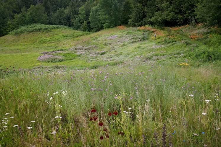 Beyond the more cultivated gardens, the summer meadow flushes with hazy sweeps of wildflowers. Photo by Rosemary Hasner / Black Dog Creative Arts.