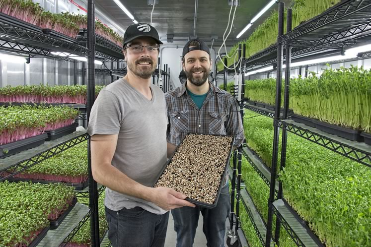 Farmstead Fresh's Marcel Pijper, holding just-planted pea shoot microgreens, and Josh Scheerer in one of their five shipping container facilities in Hillsburgh. Photo by Pete Paterson.