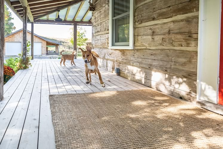 The family's four-legged members tear across the home's wraparound porch. Photo by Erin Fitzgibbon.