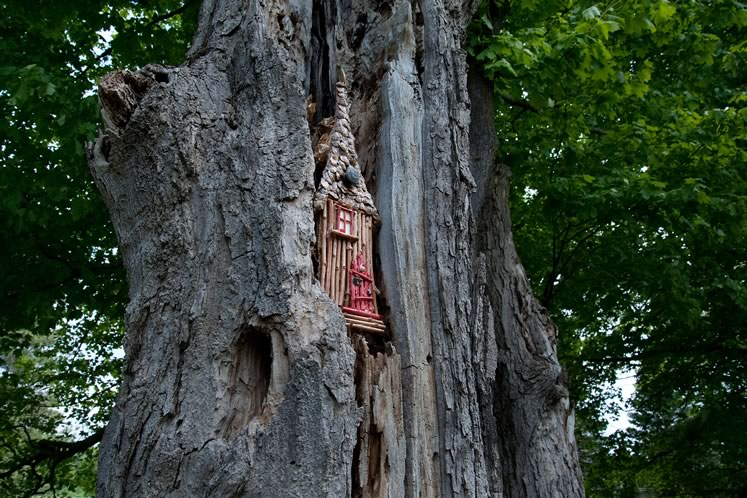 A tall stick house fits perfectly into the crevice of an aging tree on Humber Station Road. Photo by Rosemary Hasner / Black Dog Creative Arts.
