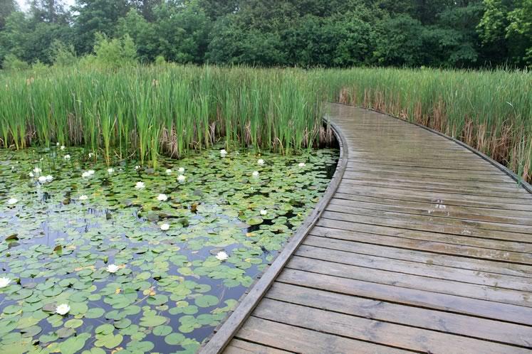 The marsh boardwalk at Terra Cotta Conservation Area. Photo courtesy CVC.