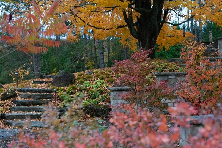 A luminous fall display at the fern pit with Asian specimen trees sheltered in the stone courtyard. A twisted old sugar maple stands guard up the slope. Photo by Tony Spencer.