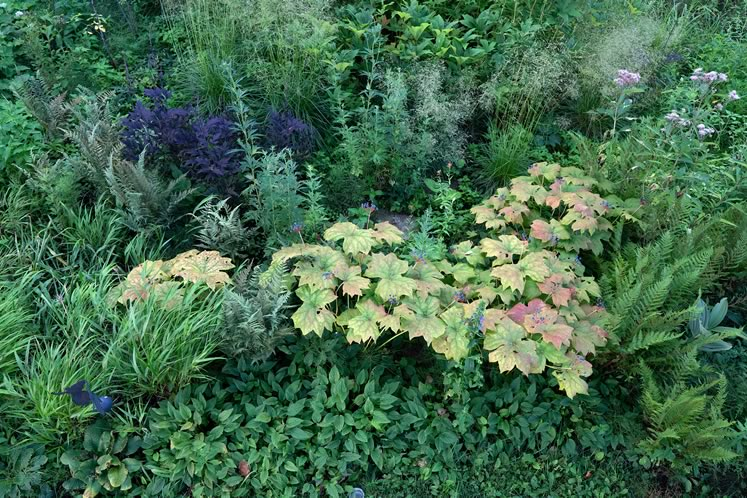 A ladder-top view shows the textural interplay between shady moisture-lovers, like umbrella leaf, lady ferns and others, fringed by creeping forget-me-not. Photo by Tony Spencer.