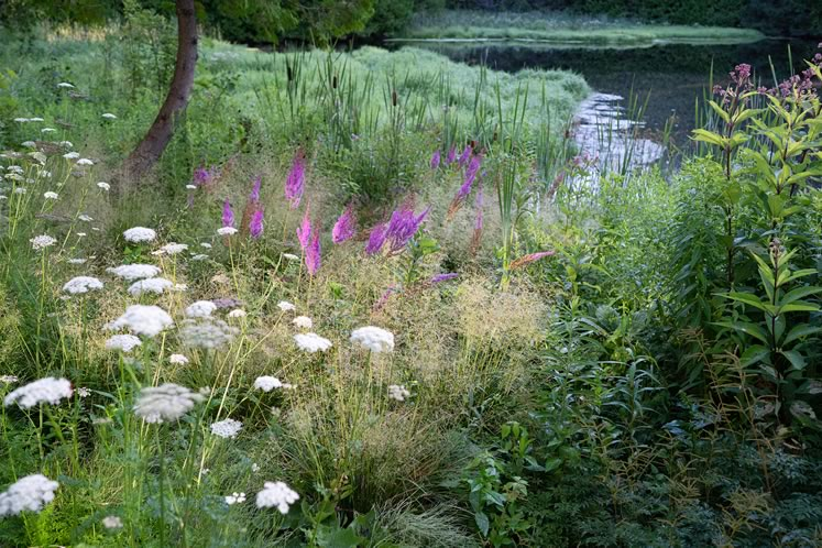 The pondside matrix with tufted hair grass ('Goldtau') and purple spires of astilbe ('Purpurlanze') softened by the white umbels of milk parsley (Selinum carvifolium). Photo by Tony Spencer.