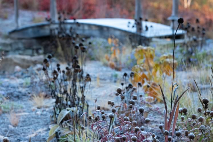 Hoarfrost in late fall crystallizes the dotted seed heads of eastern beebalm and various coneflowers. Photo by Tony Spencer.