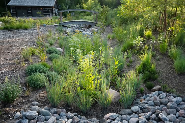Little bluestem ('Standing Ovation') forms the grass matrix in the bioswale rain garden, interplanted with black-eyed Susan and mountain mint (Pycnanthemum muticum), among others. Photo by Tony Spencer.
