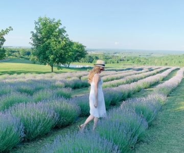A visitor takes in the epic view at Purple Hill Lavender in Mulmur. Photo courtesy Emma Courtney.
