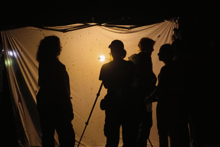 Mothing with a bedsheet and mercury vapour light. Photo by Don Scallen.