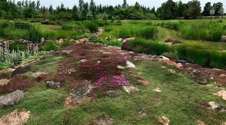 Early in the summer, a wide stone mound at the mouth of the spillway is covered in an inviting and fragrant carpet of blooming thyme. Photo by Rosemary Hasner / Black Dog Creative Arts.