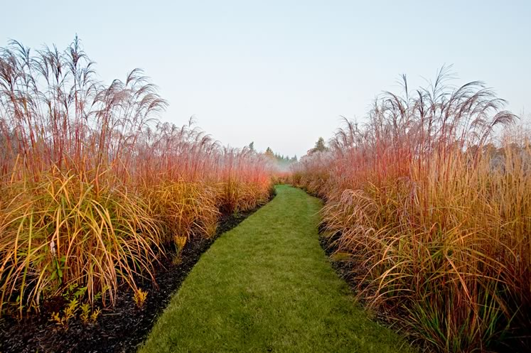 A mowed path contrasts sharply with tall grasses that flank it. Photo by Rosemary Hasner / Black Dog Creative Arts.