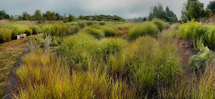 On a misty August morning, the grass garden is an ethereal palette of green form and hue. Photo by Rosemary Hasner / Black Dog Creative Arts.