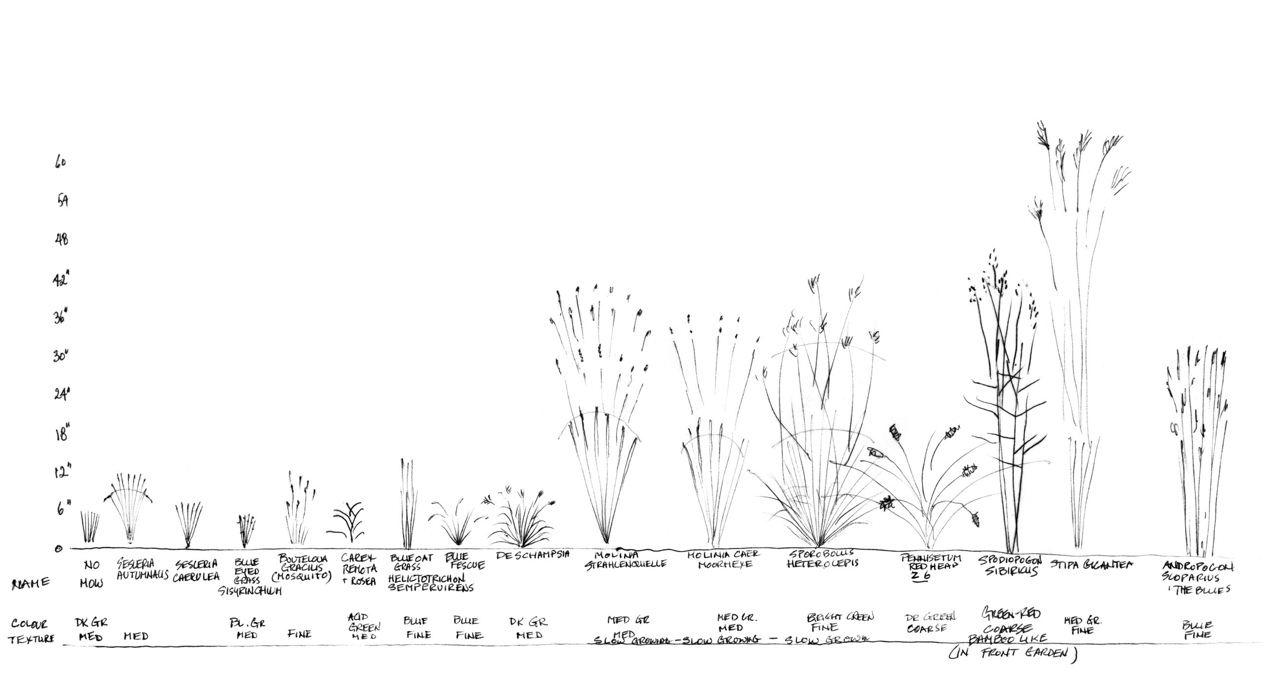 Misha's handdrawn legend of the grasses in her garden. Click for full size drawing.
