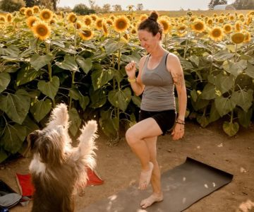 """Sue Joy's canine companion, Traffic, 11, masters a sun salutation during a """"doga"""" (dog yoga) class in August among the sunflowers at Campell's Cross Farm in Caledon. Yoga with animals is one of the many contemporary variations of the ancient practice. Photo by Venesa Zukic, Fly Light Photography."""